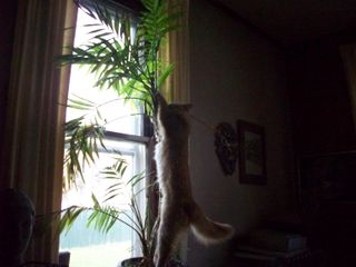 Nerissa & the Palm Tree