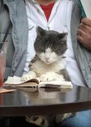 Well_read_cat
